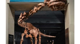 122-Foot Titanosaur: Staggeringly Big Dino Barely Fits into Museum