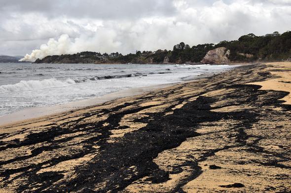 Australia's Marine Animals Will Be Bushfires' Unseen Victims