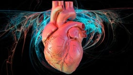 Should Computer Simulations Replace Animal Testing for Heart Drugs?