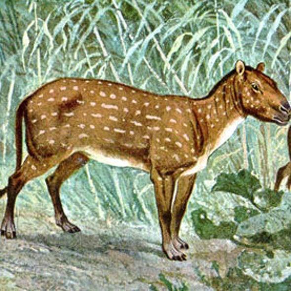 A Visual History of Ancient Miniature Horses [Slide Show]