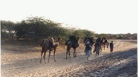 Heat Stress Drives Climate Migration