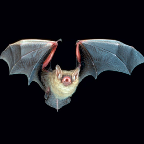 The Secret Lives of Bats [Slide Show]
