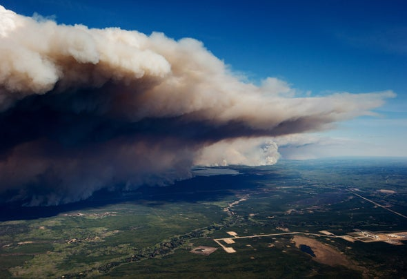 Wildfires Spark Population Booms in Fungi and Bacteria