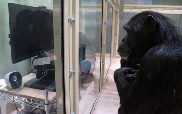 Chimps May Be Capable of Comprehending the Minds of Others