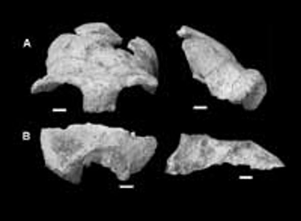 Ancient African Skull Fills Gap, Fuels Debate
