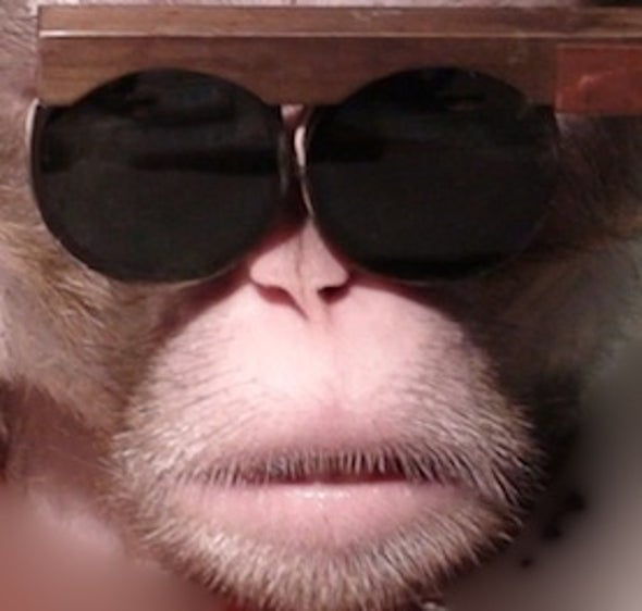 Shape-Shifting: Researchers Change How Monkeys See in 3-D