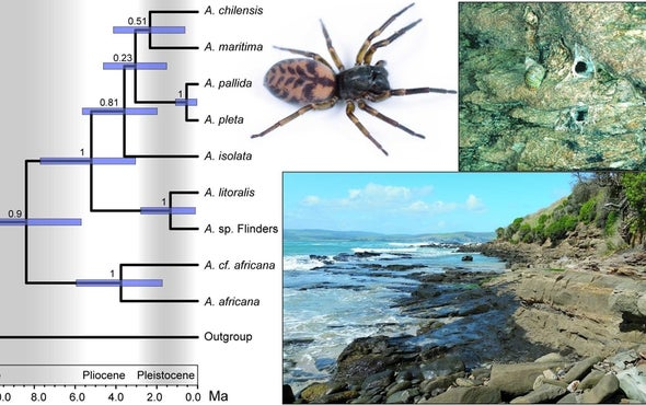 Seafaring Spiders Made It around the World--in 8 Million Years