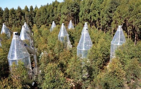 Trees Sweat to Keep Cool