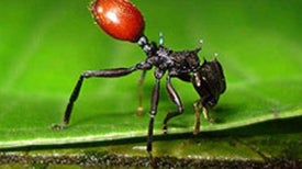 Zombie Creatures: What Happens When Animals Are Possessed by a Parasitic Puppet Master? [Slide Show]