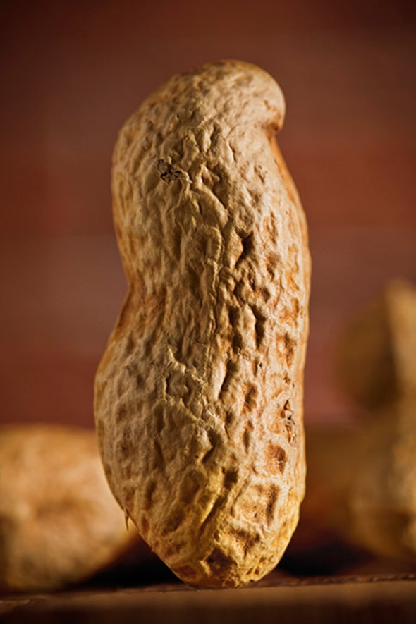 New Energy Device Is Made from Peanuts