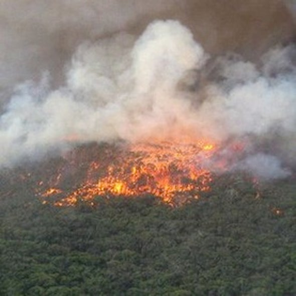 Why Australia's Wildfires Are So Extensive Now