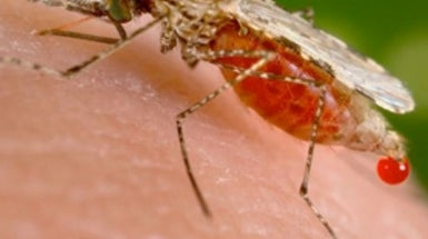 Magnetic Detection of Malaria Shows Promise