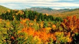 Forests Transition as New England Warms