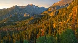 Diverse Forests Capture More Carbon