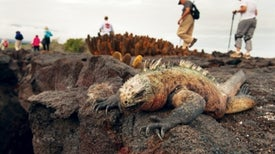 Tourists Could Soon Overrun the Galápagos, Killing Its Famous Biodiversity