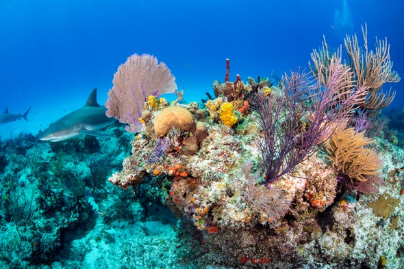 Corals Are Dissolving Away