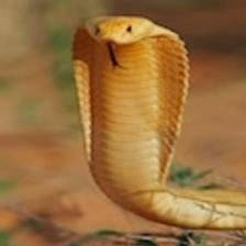 Snakes in the MRI Machine: A Study of Courage