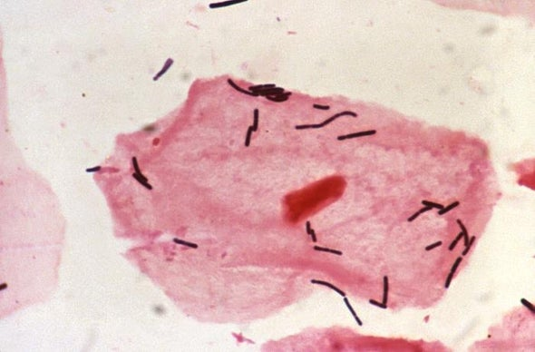 Scientists Bust Myth That Our Bodies Have More Bacteria Than Human Cells