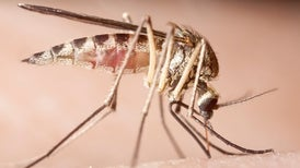 Mosquitoes to Other Flying Insects: Do You Even Generate Lift?