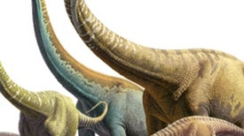 Colossal Coup: Sauropods Were Far More Successful Than Once Thought [Interactive]