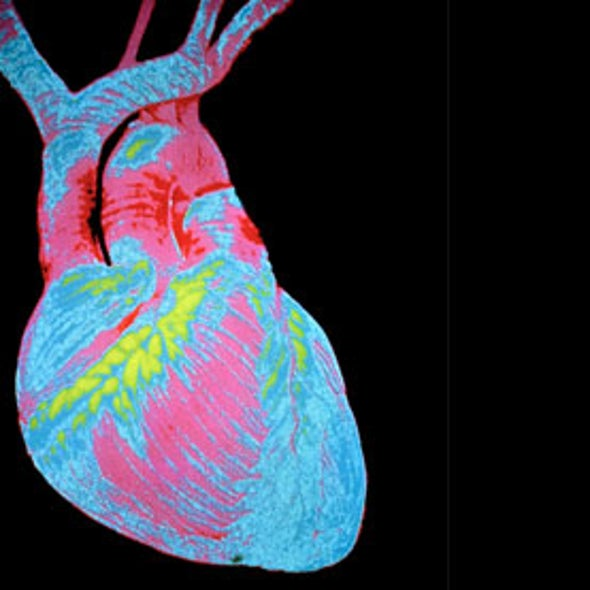 Heart Cells Can Be Coaxed to Regenerate at Low Rates