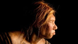 Neandertals Probably Perceived Speech Quite Well