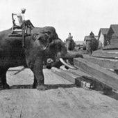 Elephants in Mandalay: