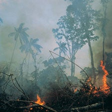 a report on the destruction of our rainforest The rain forest was here   'we haven't even had enough money to pay for aptitude tests to allow our agents to carry guns,' said barroso, adding the tests only cost 200 reais ($60).
