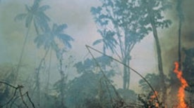 Measuring the Daily Destruction of the World's Rainforests