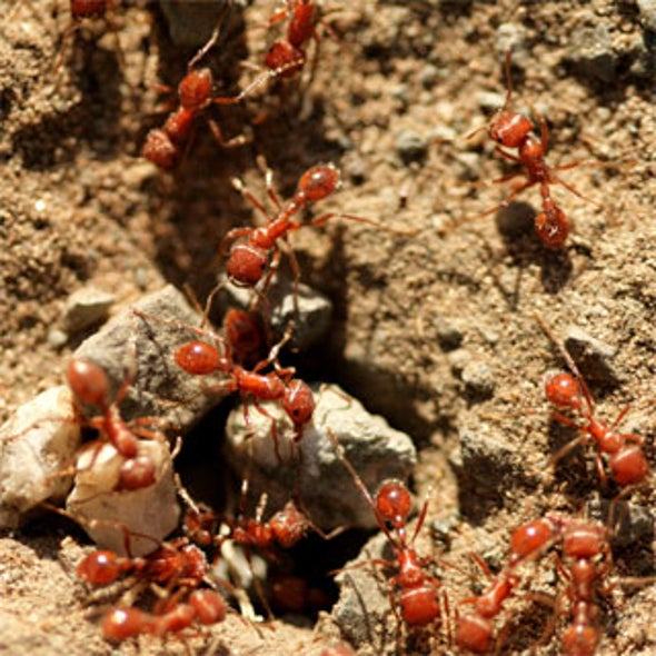 News Bytes of the Week--Tiny Ants Invade Texas