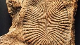 """Death Masks"" Reveal How Earliest Complex Organisms Became Fossils"