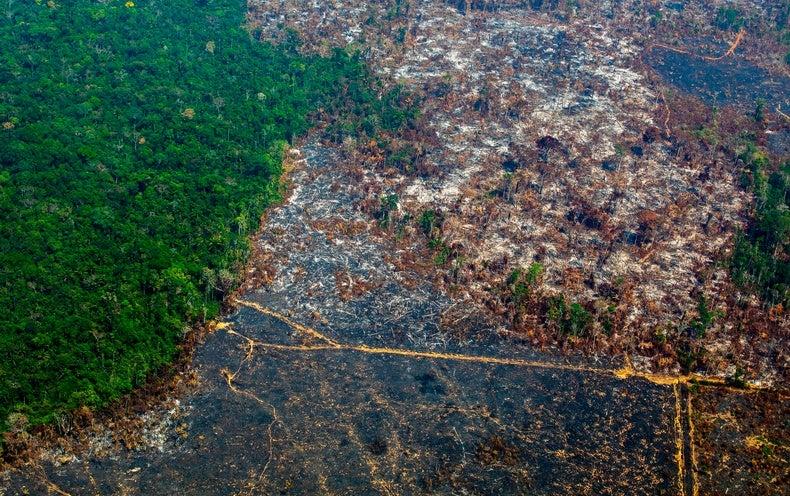 Deforestation Intensifies Warming in the Amazon Rain Forest - Scientific American