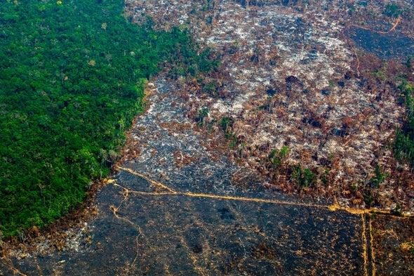 Deforestation Intensifies Warming in the Amazon Rain Forest