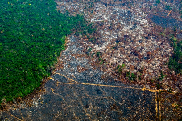 Deforestation Intensifies Warming in the Amazon Rain Forest