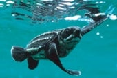 Tracking Turtles from Space