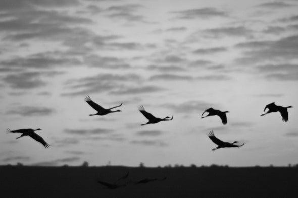 Migratory Birds: What a Long-Range Trip It's Been