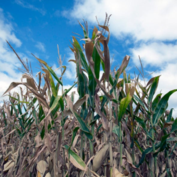 U.S. Farmers View Climate Change as Just Another Weather Challenge