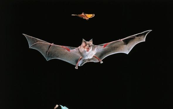 Bat Killings by Wind Energy Turbines Continue