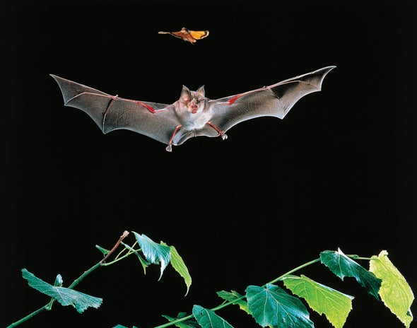 Bat Killings By Wind Energy Turbines Continue