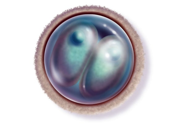 Second Chinese Team Reports Gene Editing in Human Embryos