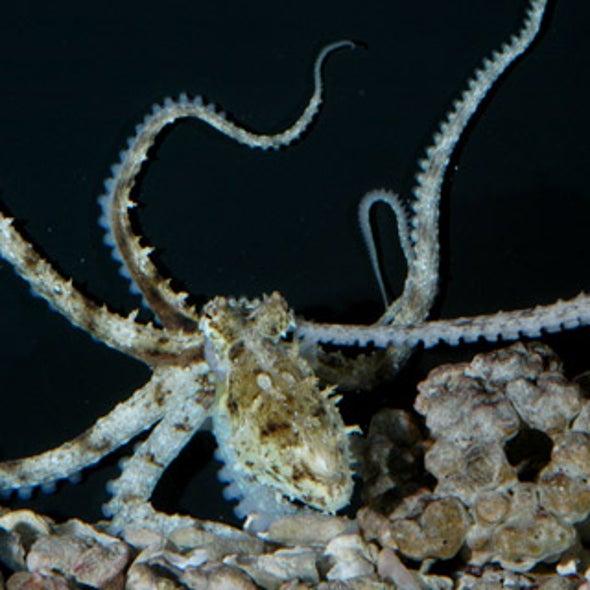 News Bytes of the Week--(Weird Sex) in an octopus's garden