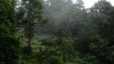 Colombia's Cloud Forests Imperiled by Climate Change, Development