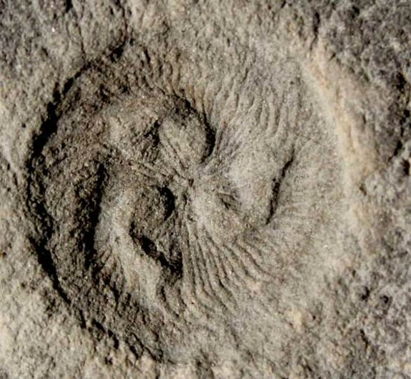 Bizarre Ancient Sea Creature Was Well-Armed for Feeding
