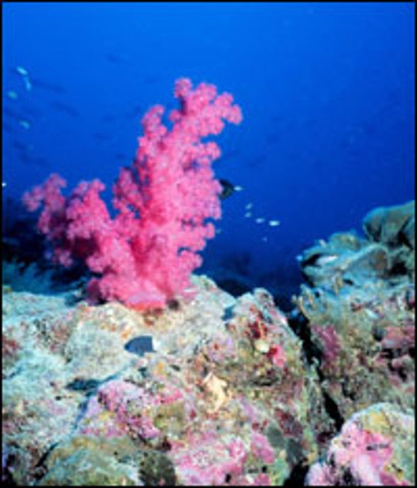 Coral Reefs Losing Ground Throughout the Pacific