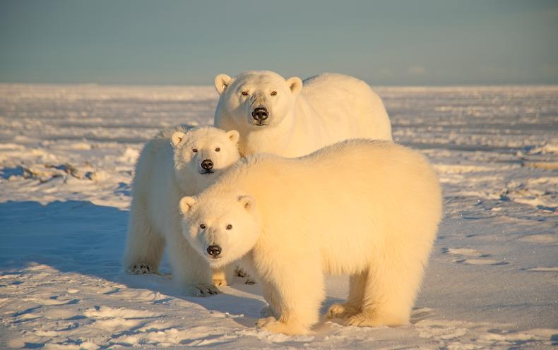 scientificamerican.com - Adam Aton - Federal Agencies Disagree on Environmental Impacts of Drilling in Alaska
