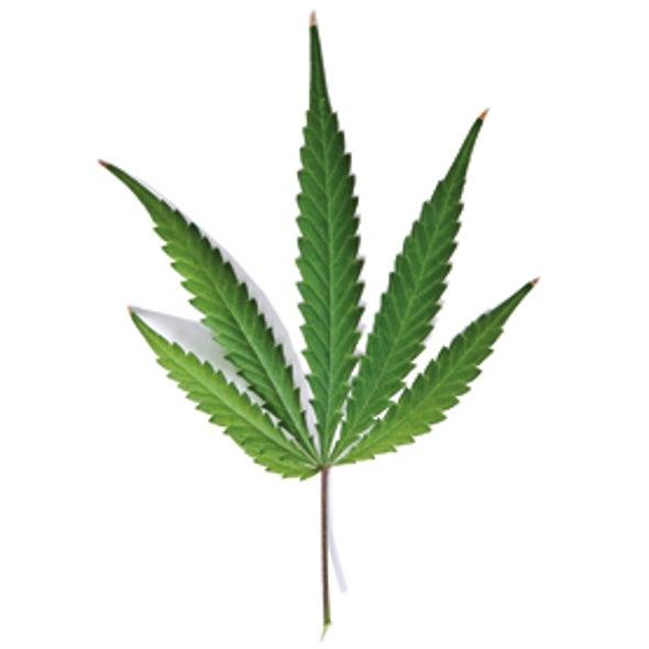 How Safe Is Recreational Marijuana?