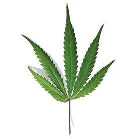 weed, cannibus, pot