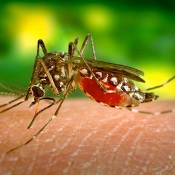 Dengue Fever Makes Inroads into the U.S.