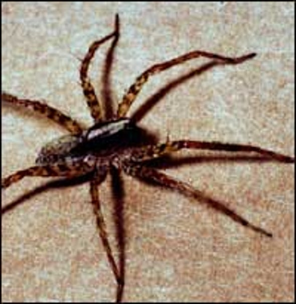 For Spiders, Familiarity Breeds Love