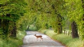 Animals Appreciate Recent Traffic Lull